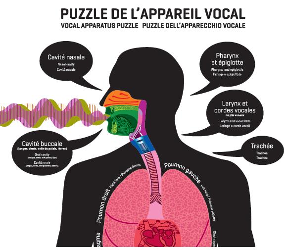 L'appareil vocal